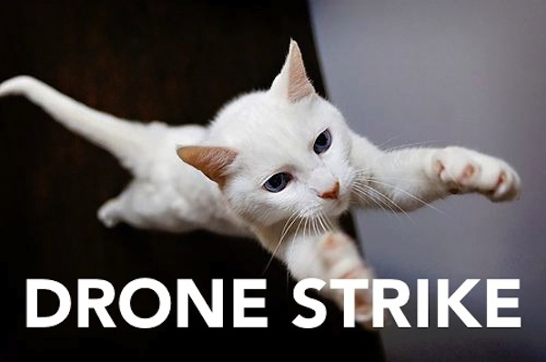 International Relations as Depicted by Cats Drone