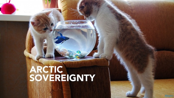 International Relations as Depicted by Cats artic