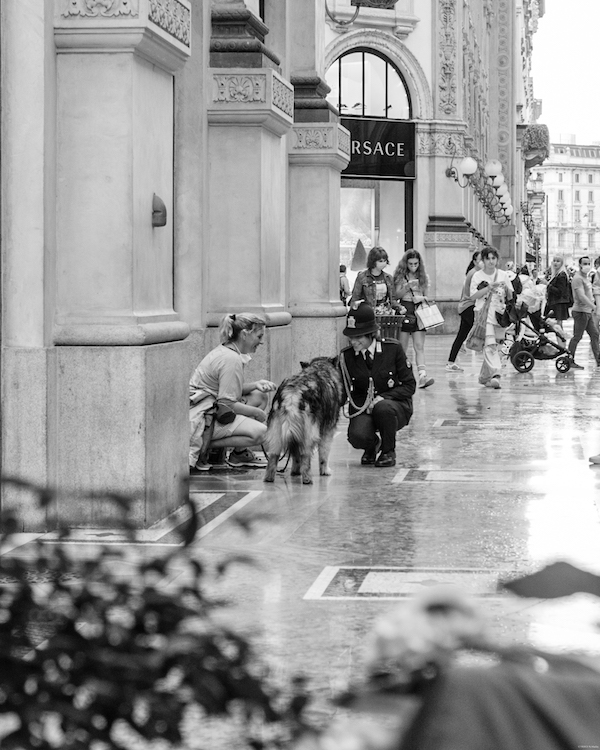 city-trip-milan Dog